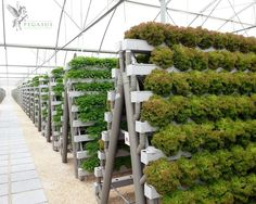 Hydroponic gardening or hydroponics is the science of growing plants using only nutrient-rich liquid as a soil replacement. Learn about hydroponics here. Hydroponic Farming, Hydroponic Growing, Hydroponics System, Growing Plants, Aquaponics Diy, Farming System, Vertikal Garden, Indoor Vegetable Gardening, Herb Gardening