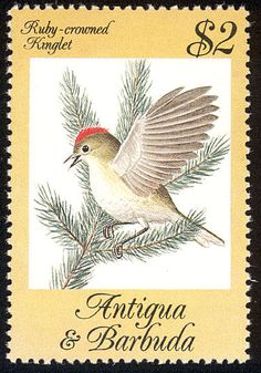Ruby-crowned Kinglet stamps - mainly images - gallery format