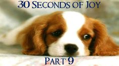 30 Seconds of Joy! Part 9! Going For a Walk!