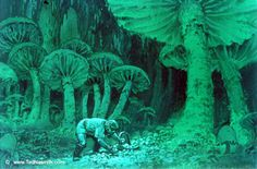 TN-Mushroom_Gatherer.jpg 450×297 pixels
