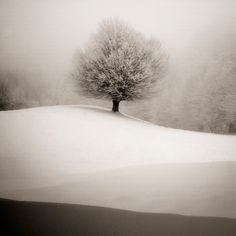 """""""If winter comes, can spring be far behind?""""  ― Percy Bysshe Shelley, Ode to the West Wind"""
