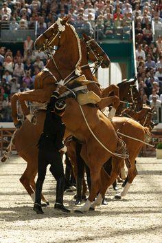 Entre Ciel et Terre. Cadre Noir. Saut Hermès 2013 #sauthermes #hermes #horse © Alfredo Piola