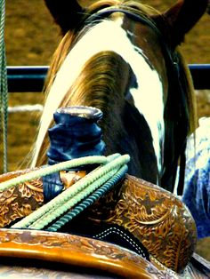horse at the rodeo by Heart of Gold Photography <3 <3