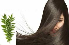 Here is a post on Ancient Ayurveda Secret to get Long and Healthy Hair in 1 Month with Curry Leaves.Curry leaves are extremely beneficial for our hair. Hair Remedies For Growth, Hair Growth, Beauty Secrets, Diy Beauty, Facial Tips, Stop Hair Loss, Curry Leaves, Strong Hair, Healthy Hair