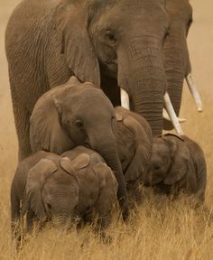Elephants. God's greatest creature and my favorite animal.  ~M