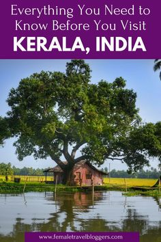 Destination Guide: Tourist Places In Kerala, India Kerala Travel, India Travel Guide, Asia Travel, Tourist Places, Places To Travel, Travel Destinations, Travel Tips With Baby, Weather In India, Kerala India