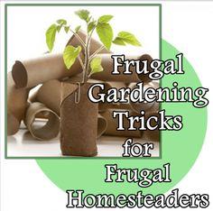 The Homestead Survival   Frugal Gardening Tricks For Frugal Homesteaders   http://thehomesteadsurvival.com