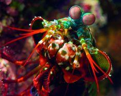 Potwory i spółka, czyli najdziwniejsze zwierzęta mórz i oceanów - www.Focus.pl - Poznać i zrozumieć świat