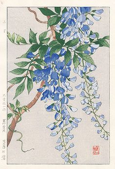 Wisteria by Yuichi Osuga from Shodo Kawarazaki Spring Flower Japanese Woodblock Prints Could be the part that starts to go down my leg Japanese Painting, Chinese Painting, Chinese Art, Botanical Illustration, Botanical Prints, Illustration Art, Illustrations, Art Chinois, Art Japonais