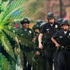 Are We Heading Towards A Prohibition-Style Cannabis Crackdown? - https://houseofcobraa.com/2016/11/27/50841/