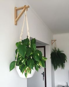 See support models for plants and check out videos with step by step to make your and further enhance the decor of your space. Indoor Garden, Indoor Plants, Home And Garden, Wall Hanging Plants Indoor, Room Deco, Inside Plants, House Plants Decor, Living Room Plants Decor, Plant Hanger