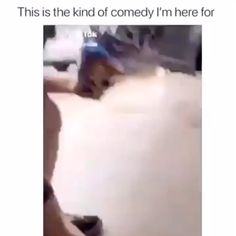 hands up meme so funny \ hands up meme + hands up meme reaction + hands up meme so funny + put your hands up meme + bts hands up meme + cat hands up meme + jimin hands up meme + hands up kpop meme Funny Video Memes, Stupid Funny Memes, Funny Relatable Memes, Haha Funny, Funny Cute, Funny Posts, Hilarious, Funny Videos, Dog Videos