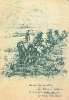 Anni '50, una cartolina sponsorizzata dalla pomata Rodolirion, contro insolazioni e punture di insetti. #Lomellina #mondariso #riso #storia