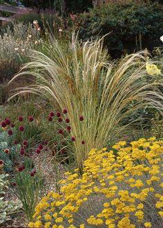 Beth Chatto gravel garden - beautiful contrast of textures Dry Garden, Gravel Garden, Garden Plants, Garden Landscaping, Garden Grass, Back Gardens, Outdoor Gardens, Amazing Gardens, Beautiful Gardens