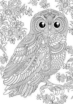 Bird Coloring Design On Pinterest