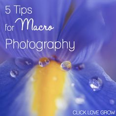 Fantastic tips to get you started in Macro Photography! Xx http://clicklovegrow.com.au/tips-tutorials/macro-photography/macro-photography/