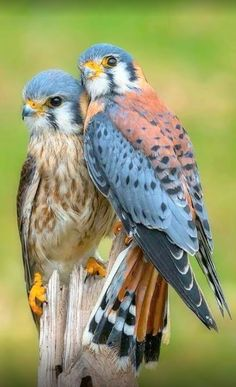 Fantastic Cost-Free beautiful birds of prey Style As a birds involving prey wedding photographer, the main issue a lot of make a complaint about will be the un All Birds, Birds Of Prey, Love Birds, Angry Birds, Pretty Birds, Beautiful Birds, Animals Beautiful, Beautiful Couple, Nature Animals