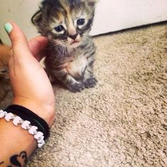 """This Little Kitty is Purrmanently Sad      This kitten belongs to Ashley Herring, who says, """"My cat recently had a litter of kittens. I call this one Purrmanently Sad Cat."""""""