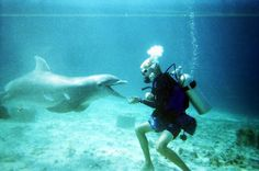 Dive with dolphins in Cozumel, a unique experience! http://www.dolphindiscovery.com/cozumel/cozumel-activities-dive-with-dolphins.asp