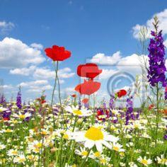 Naklejki  jesień, czystość, spokojne sceny - czerwone kwiaty maku i dzikich ✓ Szeroki wybór materiałów ✓ Dostosujemy produkt do Twoich potrzeb ✓ Sprawdź opinie naszych klientów!