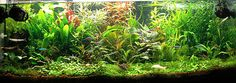 How To Buy The Correct Filter For Your Fish Tank…Choosing the right type of aquarium filter is your number one priority as an aquarist.  Aquarium filters are the most important part of your aquarium for both freshwater and marine aquaria because it removes physical and soluble chemical waste. Typically fish, kept in fish tanks produce waste from excrement and respiration. Another source of waste is uneaten food or plants and fish which have died.(read more)...