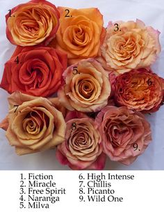 Flirty Fleurs Orange Rose Study. Milva, Naranga, Chillis, High Intense, Miracle, Free Spirit, Wild One, Picanto, Fiction