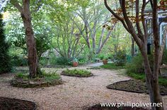 Phillip Oliver uses paths and groundcovers for negative space instead of lawn in his Alabama garden