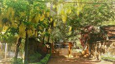 MAURICE : 6) CAP MALHEUREUX (1) - Le tamarin fruit d'exception - Poésie - Blague - Recette