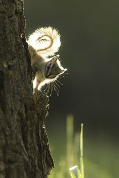 """""""A Woodland Wonder."""" Looks like a chipmunk but I'm sticking it under my squirrel file anyways because it's cute!"""