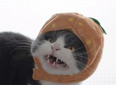 10 Best Images of Cats Dressed as Food