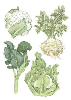 This card features three delicious winter vegetables: broccoli, cauliflower, and celeriac - Rigel Stuhmiller