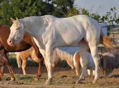 Ranch! Winchester Shotgun, Horses For Sale, Palomino, Ranch, American, Animals, Guest Ranch, Animales, Animaux