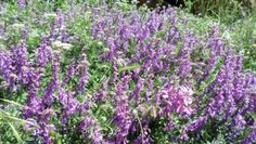 Plants Bank Biennial Plants, Types Of Soil, Cool Plants, Green Leaves, Perennials, Outdoor Gardens, Lawn, Succulents, Seeds