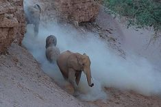 Most Popular Image, Top Ten, Elephants, Wilderness, Photographs, Hearts, The Incredibles, In This Moment, Animals