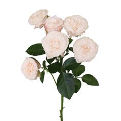 Wispy Pink Bulk Spray Roses. 4 to 9 blooms per stem.  Small Pack will have 4 bunches with a stem count ranging from 28 to 36 stems for $119.99