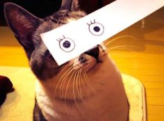 chat-yeux-papier-3