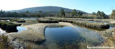 Salinas de Ulló. Las marismas tienen una gran diversidad de flora y fauna  Más info: http://www.naturalezasobreruedas.com/2015/02/las-salinas-de-ullo-vilaboa.html