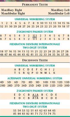 medical charting symbols dental charting symbols charting made rh pinterest com Universal Dental Charting Symbols Printable Dental Charting Forms