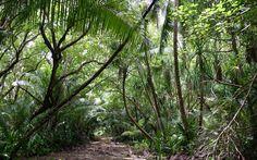 jungle path - Google Search
