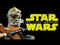 """There's A """"Star Wars: The Force Awakens"""" Trailer Starring Cats"""