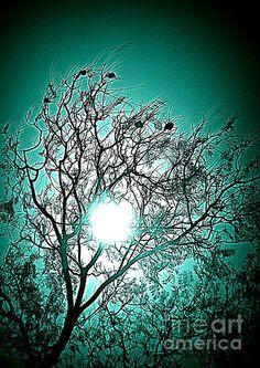 Moon Shine   Artist  Clare Bevan   Medium  Photograph - Photography   Description  Beautiful interior design piece showing a tree with the moonlight shining through.  #greenart #homedecor #clarebevan
