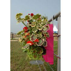 Mur végétal BRIQUE VERTE sur balcon végétalisé