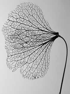 leaf, black and white