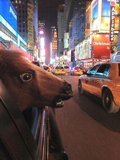Bright Lights Horse