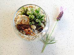 Tiny Fishbowl Terrarium Fishbowl, Auckland, Terrarium, Decor, Round Fish Tank, Terrariums, Decoration, Fish Bowl Vases, Decorating