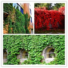 outdoor fake trees - Google Search