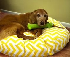 Large Round Zig Zag Chevron Dog Bed with Insert by maisonboutique, $90.00