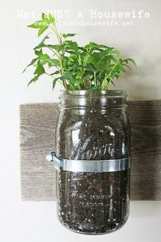 Using jars for home gardens