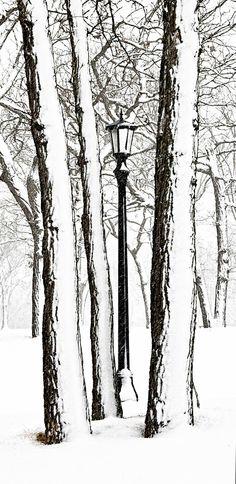 Winter Photograph- Solitude - Snow - Narnia - Lamp -Home Decor -  Landscape - Wall Art - Pastel - Decorating. $30.00, via Etsy.