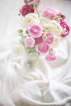 Ranunculus Love. by Caterina Gualtieri on 500px